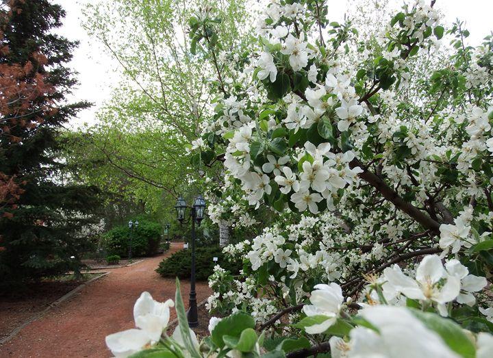 Spring blossoms - Deb Johnston
