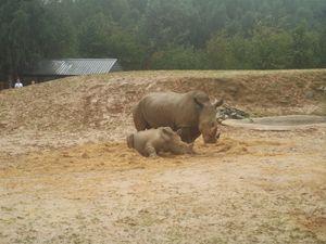 Do i  rhino or do rhinot. - Nioami.