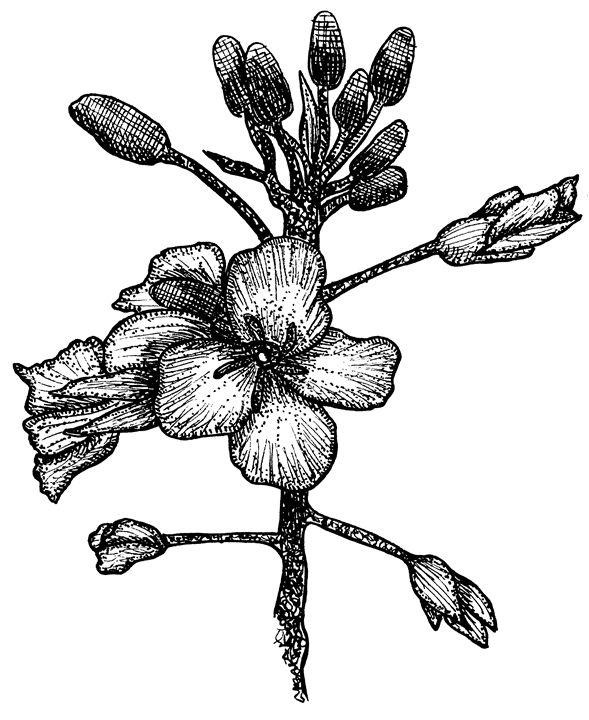 // Flora // - MajesticPaula