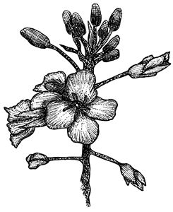 // Flora //