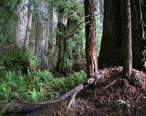Jedediah Smith Forest