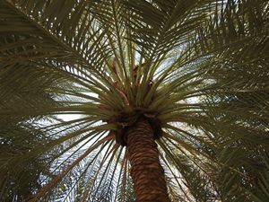 Date Palm Photograph - David K. Myers Watercolor/ Photo Gallery