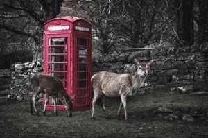 Deers Calling - Pete Diako