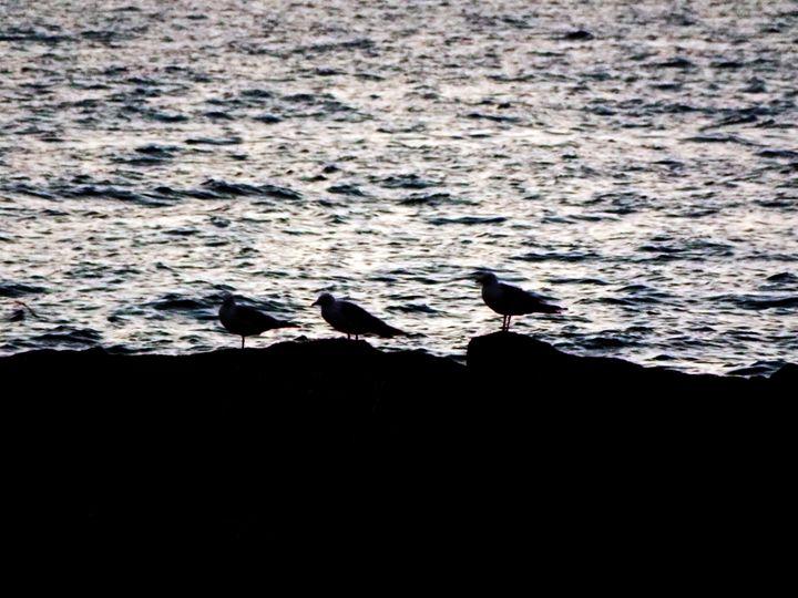 Three Gulls - Shayne's Photography