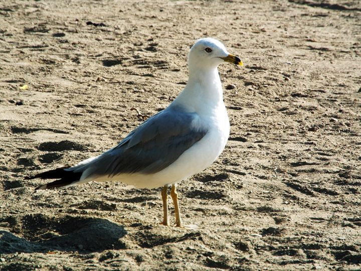 Curious Bird - Shayne's Photography