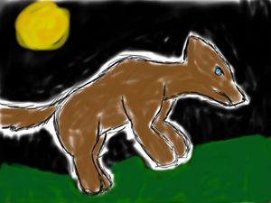 Wolf at night