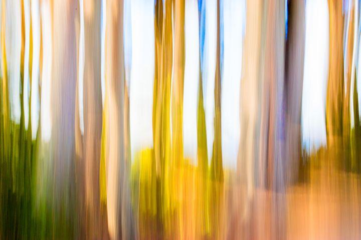 Moving Trees II - Welborne Fine Art