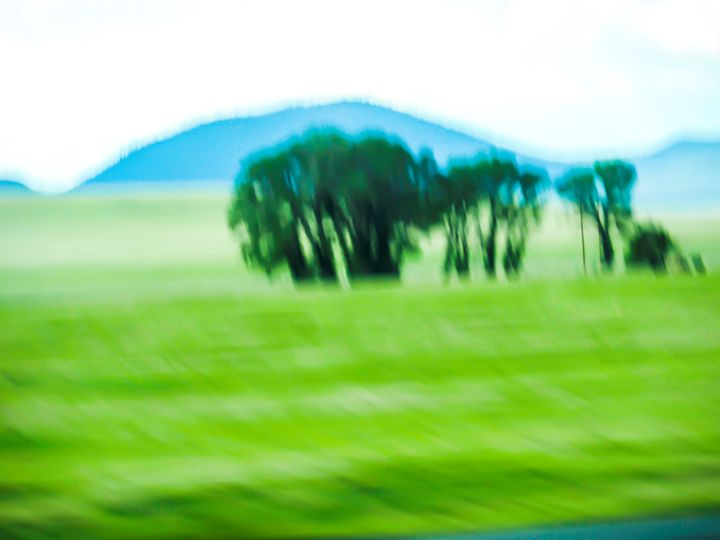 TREES - Aspen Willow Fine Art Photography Gallery