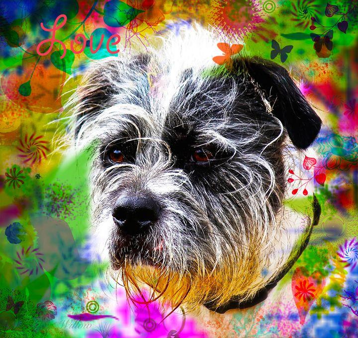 Dogs Love : Shih-Tzu - Aspen Willow Fine Art Photography Gallery