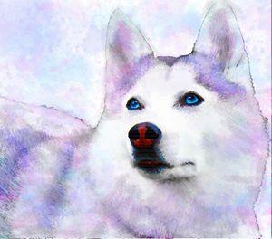 Rainbow Husky - Aspen Willow Fine Art Photography Gallery