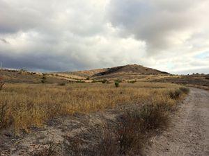 Grassland Walk in Mission Trails