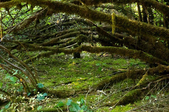Magical Woodlands - Flashbulb Foto