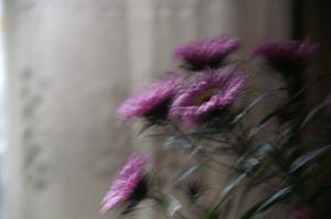 Flowers in motion