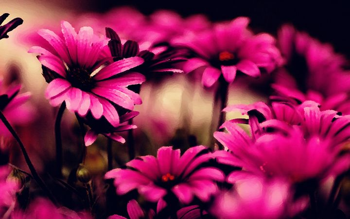 pink flower - Jayson griffin