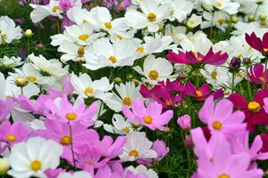 flowers in Provenza