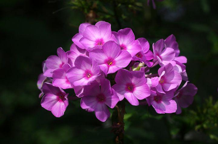 Pretty in Pink - Jamiol's Art