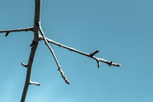 Twigs Against Sky 05