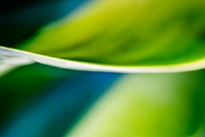 Agave Abstract 06