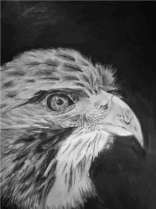 Eagle - creatorunique
