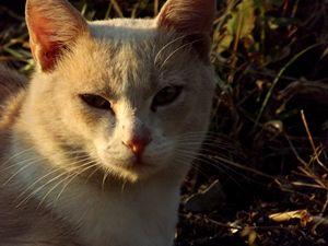 Cat's life in nature