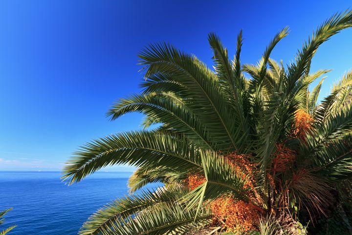 palm over the sea - Antonio-S