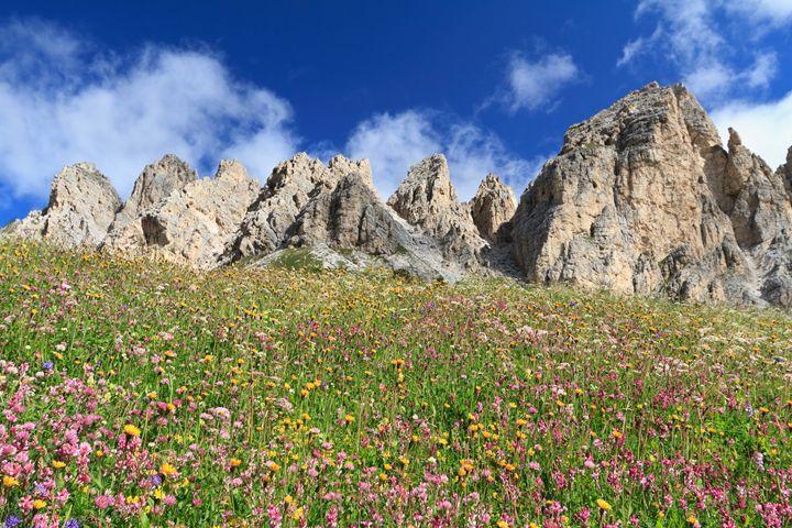 Dolomiti - flowered meadow - Antonio-S