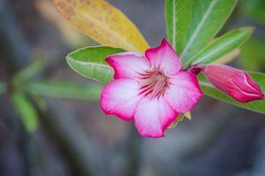 Florida Keys Flower