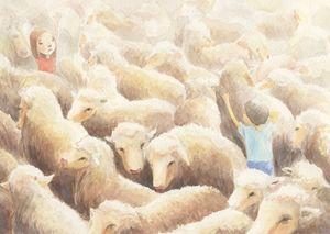 between sheep