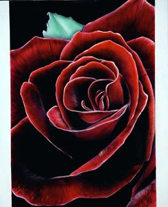 Airbrush rose painting