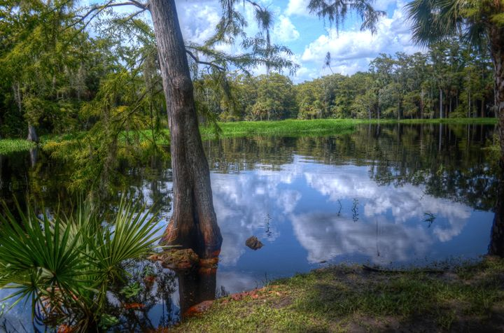 Peaceful Florida - Caldwell Gallery