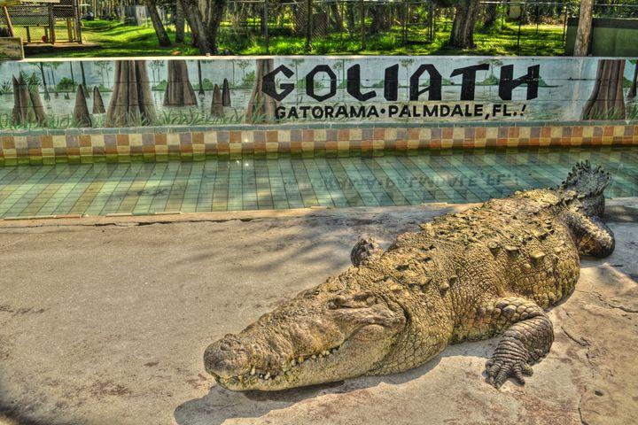 Giant Crocodile - Caldwell Gallery