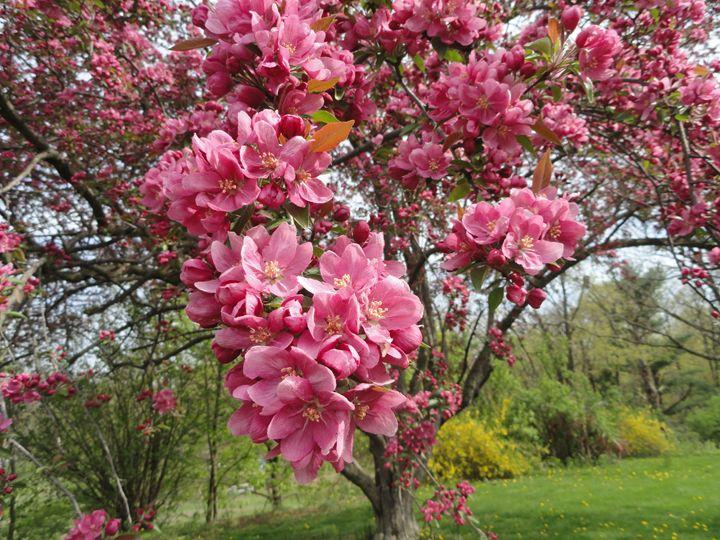 Springtime - AJ Worley