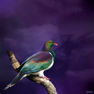 King Kereru - Julian Hindson