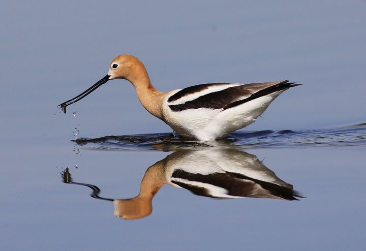 Reflection - Awesome Nature