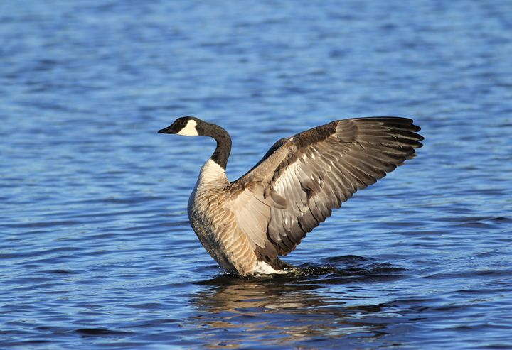 Goose Stretch - Awesome Nature