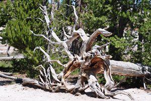 Root Art