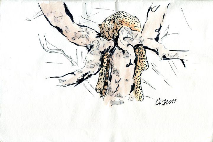 Leopard at rest - Ücil Jean