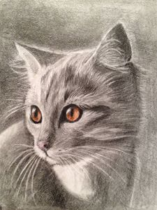 Amber eyes cat