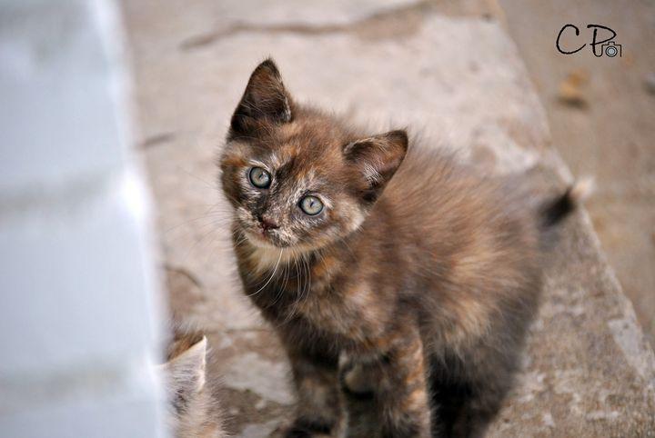 Country Kitten - Clark Photography