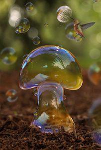 Soapbubble mushroom
