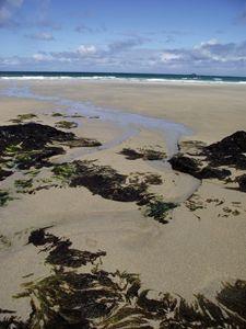 Seaweed, sand and surf