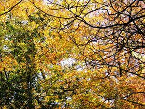 Autumn leave no.2