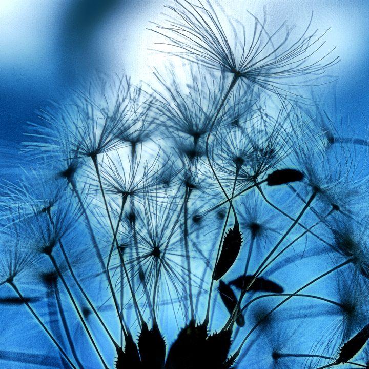 Dandelion Seed Abstract - Brian Raggatt