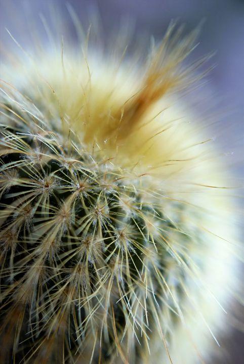 Punk Cacti - Brian Raggatt