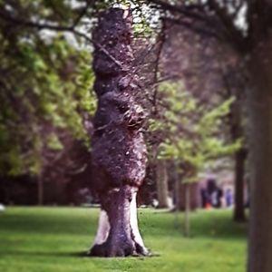 Treant tree