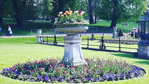 Flowers in a park