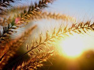 Breathing Sunshine