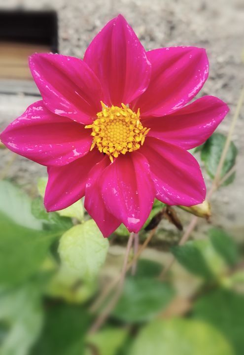 Pinkish - Ema's Art