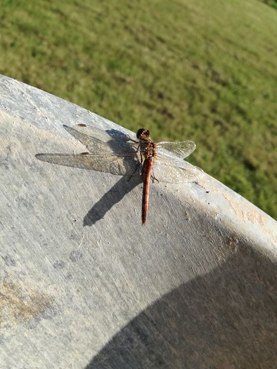 Dragonfly - Ema's Art