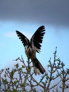 Praying Bird